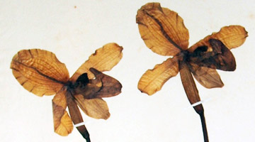 Cultivated and historic herbaria