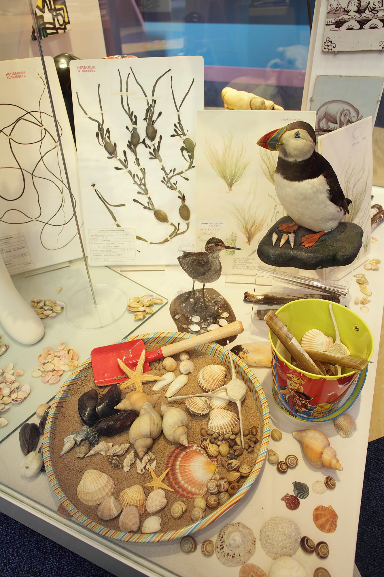 Beside the seaside with shells and a puffin