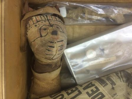 A mummified cat within a box full of other animal mummies