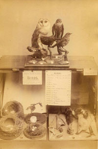 A cabinet of animal specimens