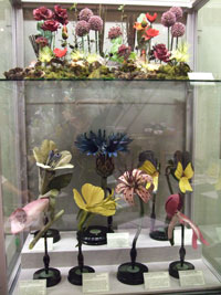 Plant models in a museum display case