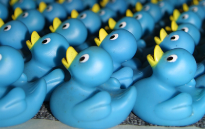 Many rows of blue rubber ducks