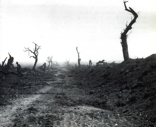 barren landscape with bare tree trunks stripped of branches and leaves