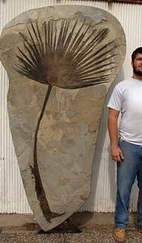 a man standing next to a very tall piece of rock with a fossield plant stem in it
