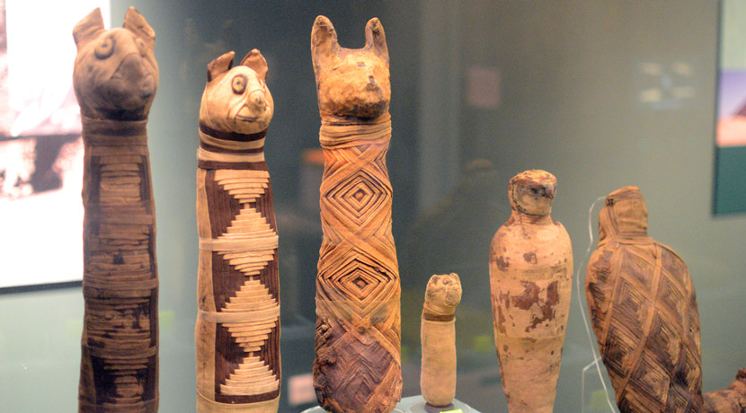 Some of the animal mummies in the exhibiition