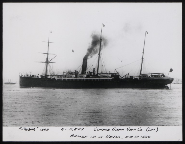 Photograph of Pavonia, Cunard Line card