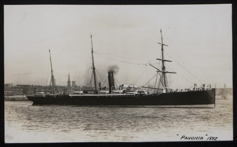 Photograph of Pavonia, Cunard Line card