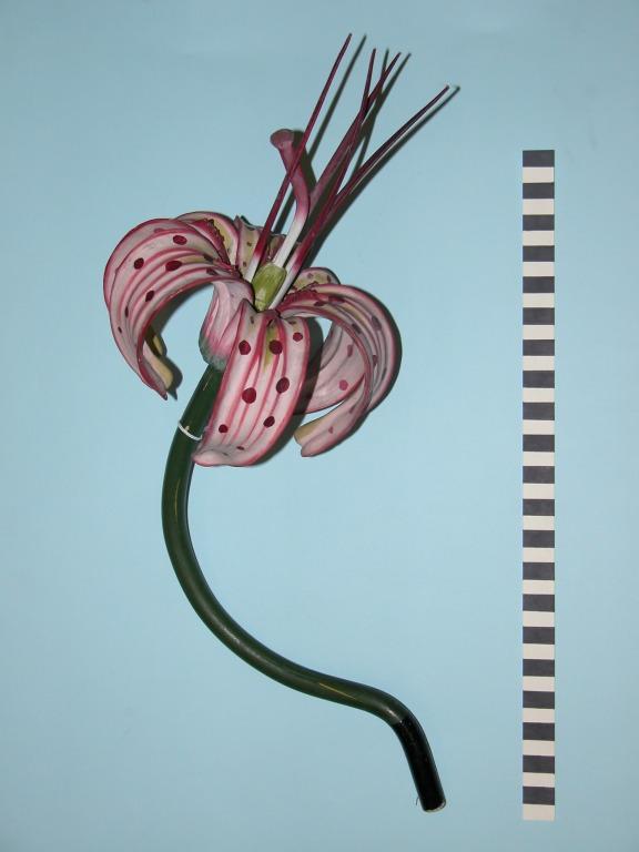 Lillium martagon card