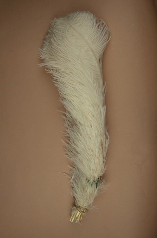 Plume of Ostrich Feathers card