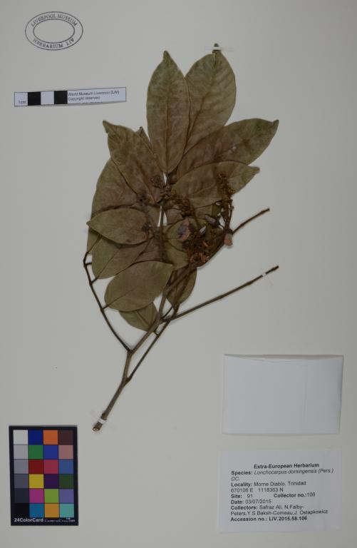 Lonchocarpus domingensis card
