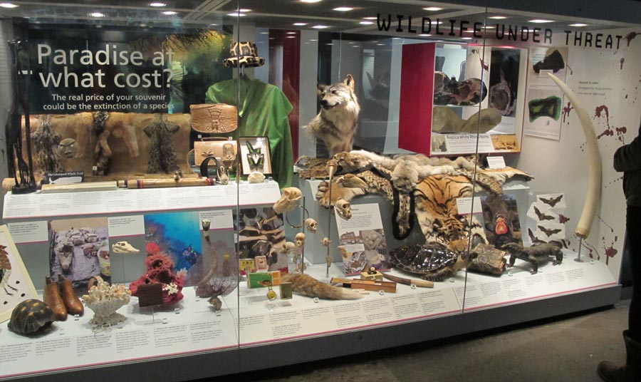 museum display of endangered species, including animal skins seized at customs