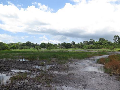 Trinidad and Tobago plant collection