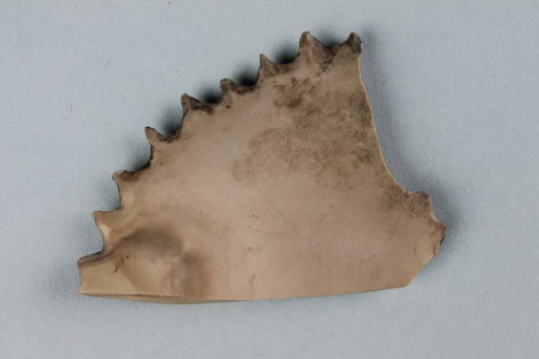 Flint Comb card