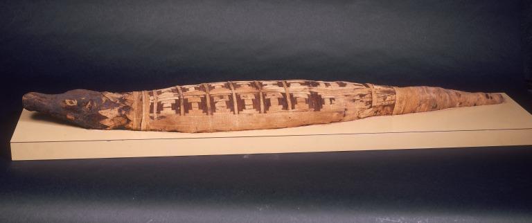 Mummified Crocodile card