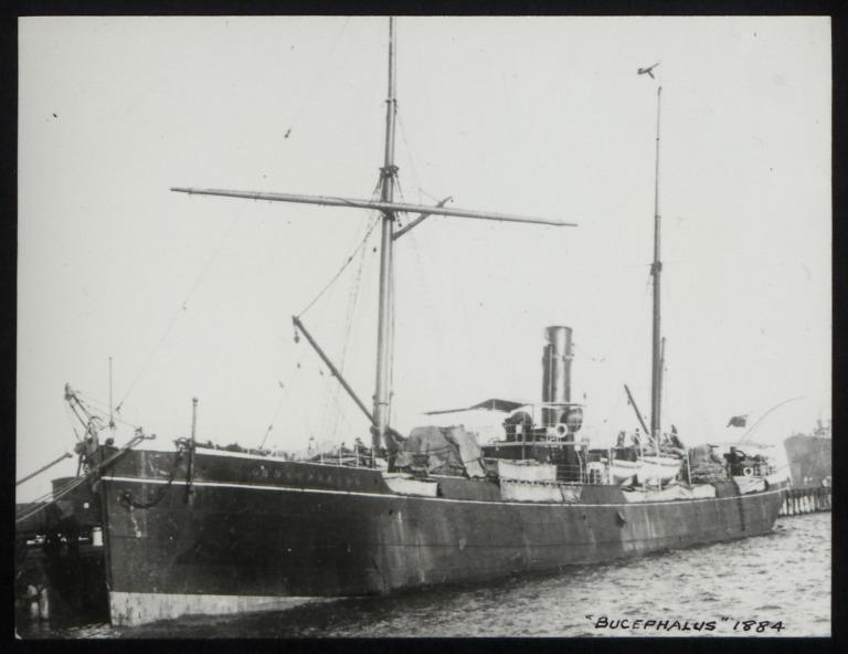 Photograph of Bucephalus, A Currie and Company card