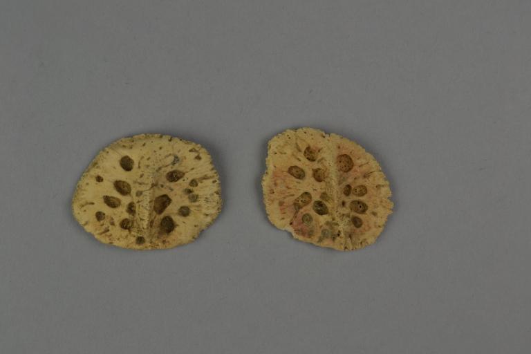 Crocodile Mummy Fragments card