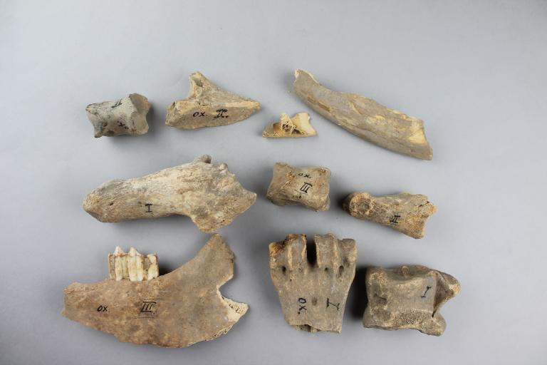 Bovine Bones card