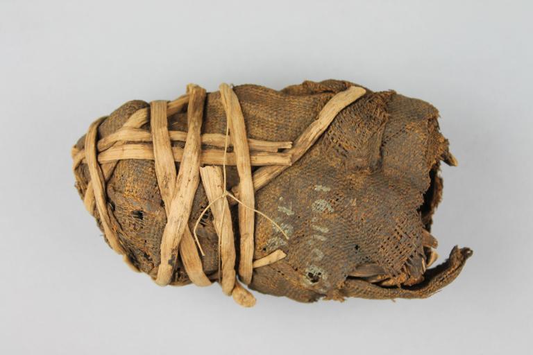 Mummified Crocodile Egg card