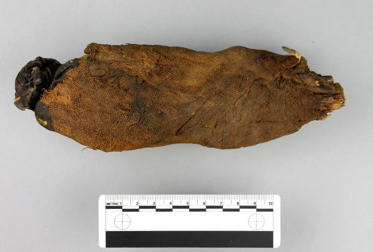 Mummified Falcon card