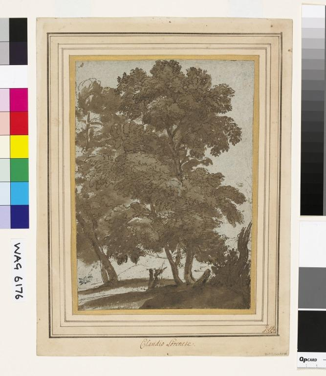 Study of  Trees, with Two Figures card