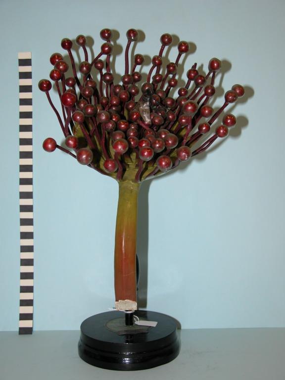Drosera rotundifolia card