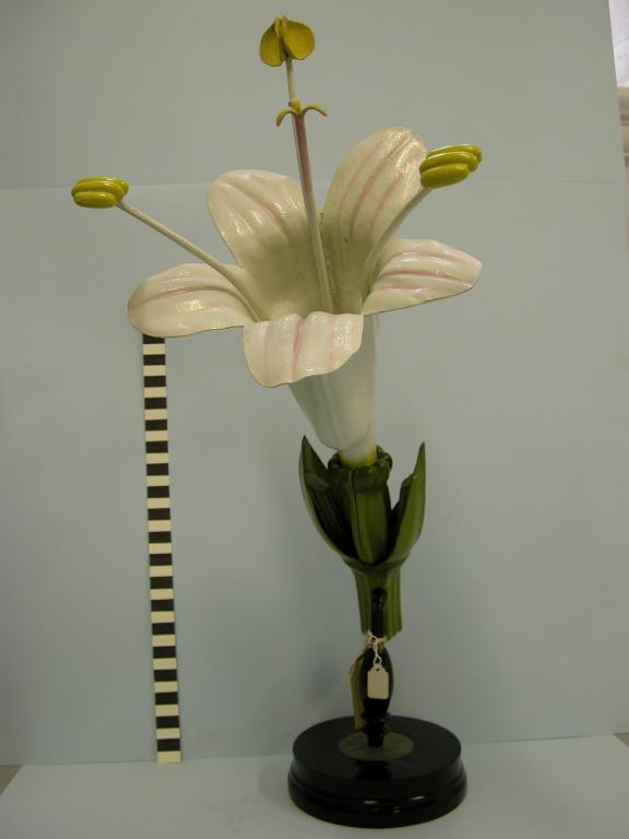 Valeriana officinalis card