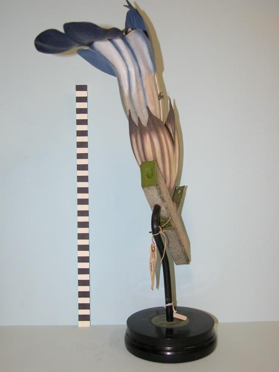 Salvia officinalis card