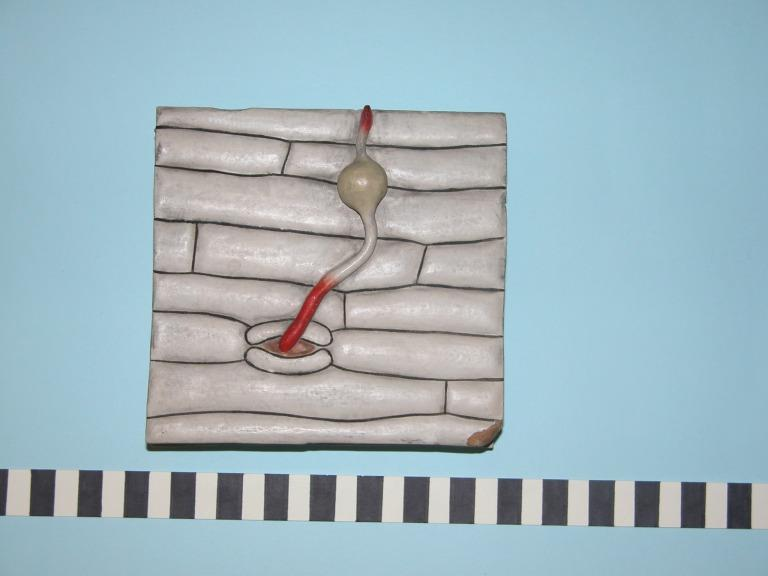 Puccina graminis card