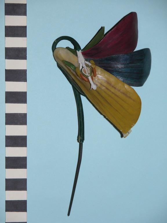 Viola tricolor card