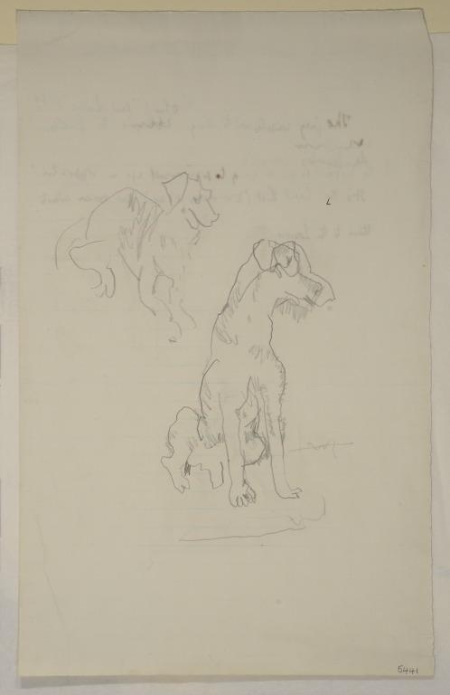 Two Studies of a Dog card