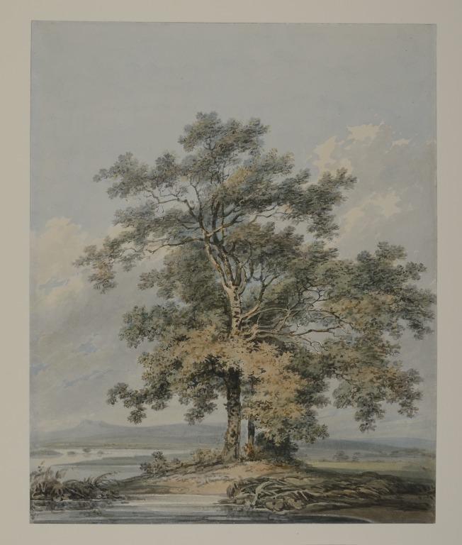 The Oak Tree card