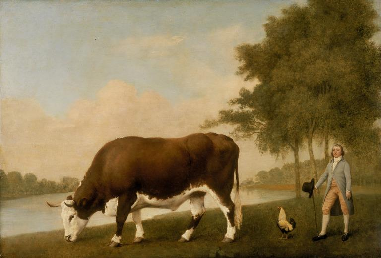 The Lincolnshire Ox card