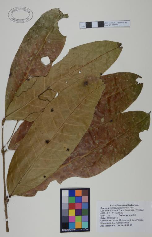Carapa guianensis card