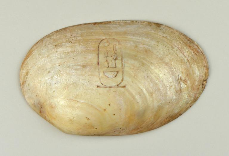 Inscribed Shell card