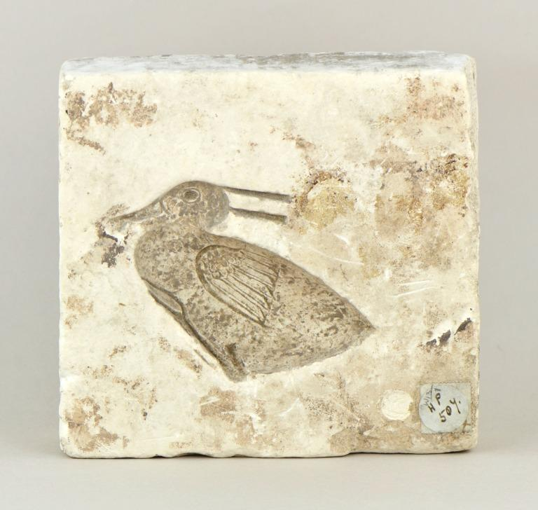 Mould card