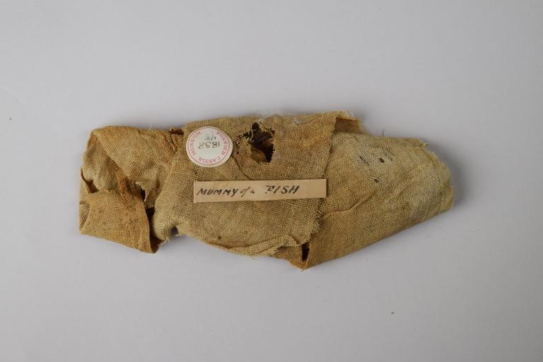 Mummified Fish card